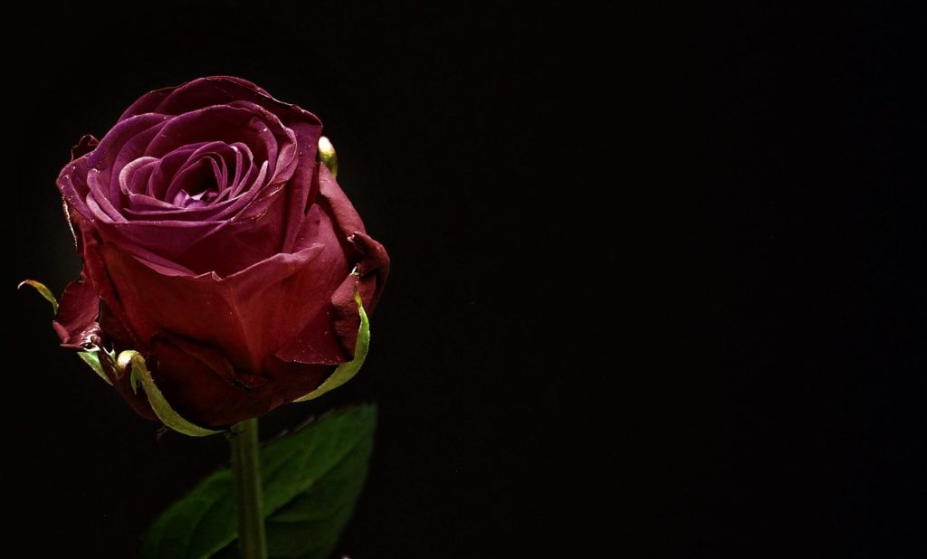 rose-1460766_1280